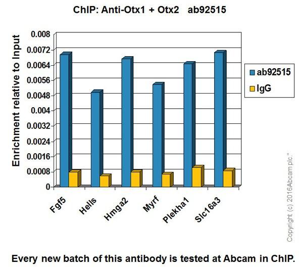 ChIP - Anti-Otx1 + Otx2 antibody [EPR3347] - ChIP Grade (ab92515)