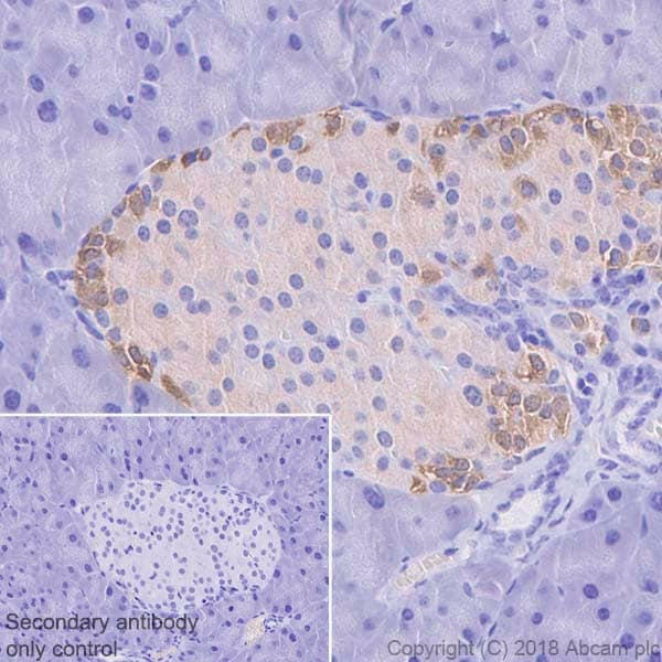 Immunohistochemistry (Formalin/PFA-fixed paraffin-embedded sections) - Anti-Glucagon antibody [EP3070] (ab92517)