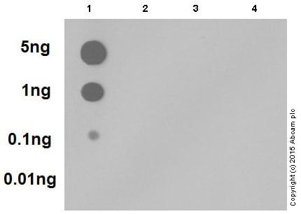 Dot Blot - Anti-SMAD5 (phospho S463 + S465) antibody [MMC-1-104-3] (ab92698)