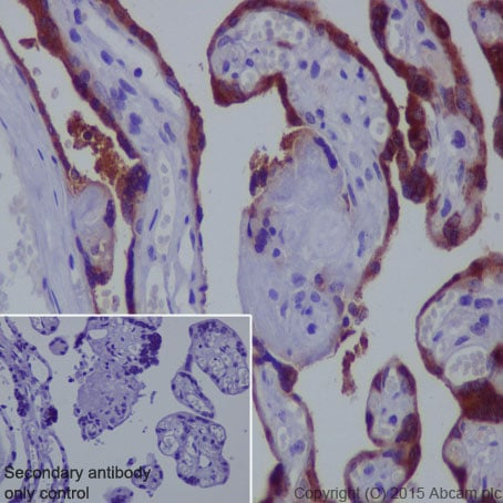 Immunohistochemistry (Formalin/PFA-fixed paraffin-embedded sections) - Anti-Glycoprotein hormones (alpha 5) antibody [EP3373] (ab92738)