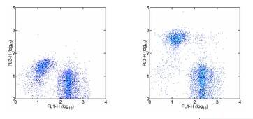 Flow Cytometry - Anti-Ly76 antibody [TER-119] (PE/Cy7 ®) (ab93583)
