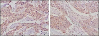 Immunohistochemistry (Formalin/PFA-fixed paraffin-embedded sections) - Anti-GSK3 beta antibody [3D10] (ab93926)