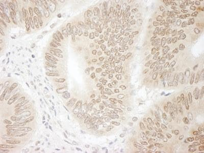Immunohistochemistry (Formalin/PFA-fixed paraffin-embedded sections) - Anti-CDT2 antibody (ab95129)
