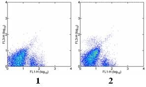 Flow Cytometry - PE/Cy7® Anti-c-Kit antibody [2B8] (ab95676)
