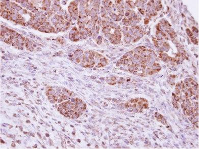 Immunohistochemistry (Formalin/PFA-fixed paraffin-embedded sections) - Anti-DUSP7 antibody (ab95960)