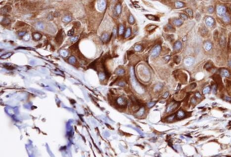 Immunohistochemistry (Formalin/PFA-fixed paraffin-embedded sections) - Anti-VPS16 antibody (ab96033)