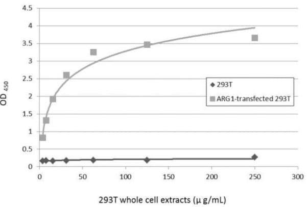 ELISA - Anti-Liver Arginase antibody (ab96183)