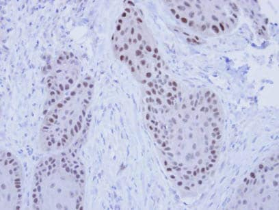 Immunohistochemistry (Formalin/PFA-fixed paraffin-embedded sections) - Anti-RFC4 antibody (ab96852)