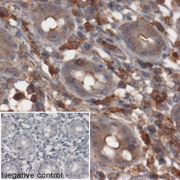 Immunohistochemistry (Formalin/PFA-fixed paraffin-embedded sections) - Goat Anti-Rabbit IgG H&L (HRP) (ab97051)
