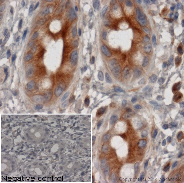 Immunohistochemistry (Formalin/PFA-fixed paraffin-embedded sections) - Goat Anti-Rat IgG H&L (HRP) (ab97057)