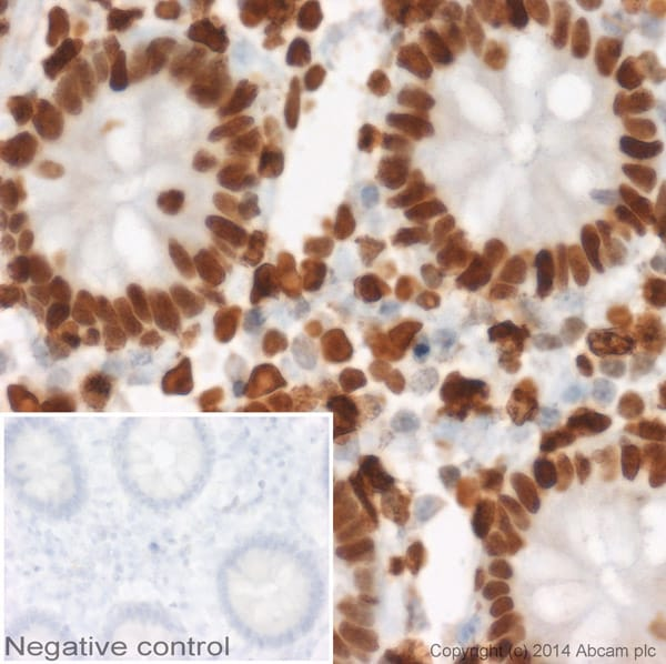 Immunohistochemistry (Formalin/PFA-fixed paraffin-embedded sections) - Goat Anti-Mouse IgG1 (HRP) (ab97240)