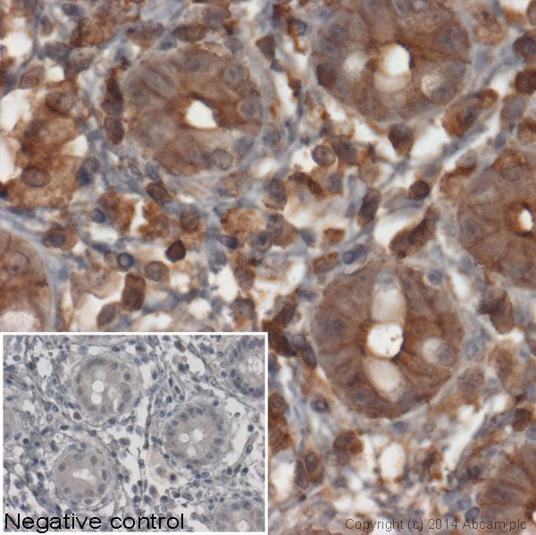Immunohistochemistry (Formalin/PFA-fixed paraffin-embedded sections) - Goat Anti-Mouse IgG Fc (HRP) (ab97265)
