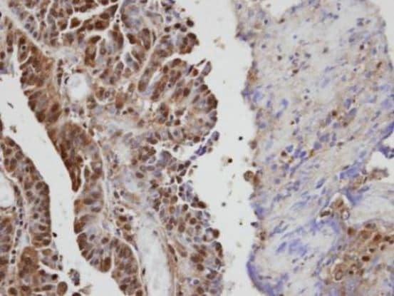 Immunohistochemistry (Formalin/PFA-fixed paraffin-embedded sections) - Anti-VAV1 antibody (ab97574)