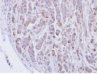 Immunohistochemistry (Formalin/PFA-fixed paraffin-embedded sections) - Anti-GLRA2 antibody (ab97628)