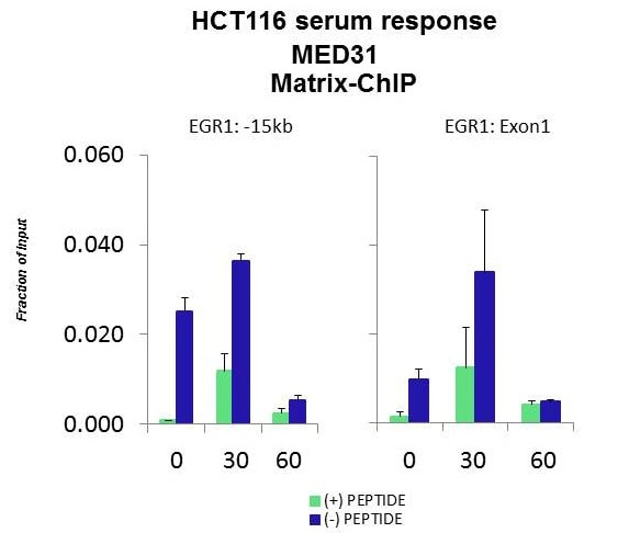 ChIP - Anti-MED31 antibody (ab98142)