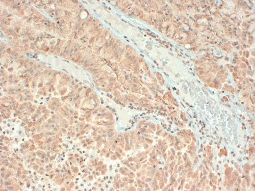 Immunohistochemistry (Formalin/PFA-fixed paraffin-embedded sections) - Anti-VAMP1 antibody [SP-11] (ab98888)