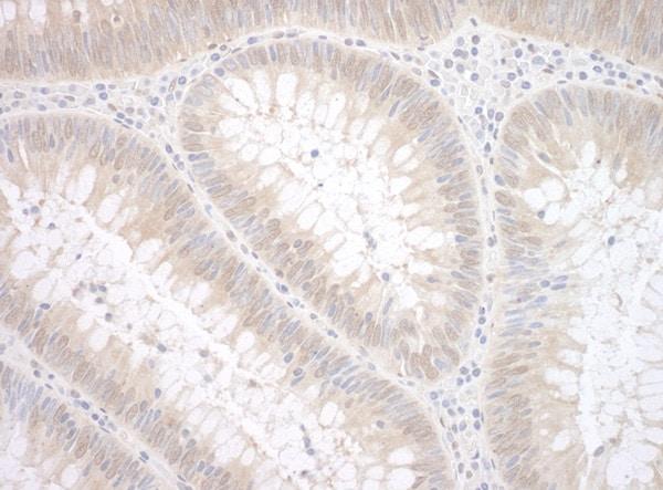 Immunohistochemistry (Formalin/PFA-fixed paraffin-embedded sections) - Anti-TDP2 antibody (ab99279)