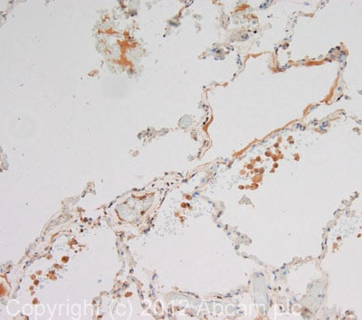 Immunohistochemistry (Formalin/PFA-fixed paraffin-embedded sections) - Anti-SOSTDC1 antibody (ab99340)