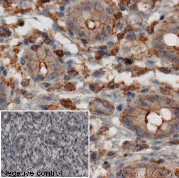 Immunohistochemistry (Formalin/PFA-fixed paraffin-embedded sections) - Mouse monoclonal [2A9] Anti-Rabbit IgG heavy chain (HRP) (ab99702)